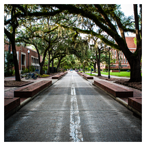 oak lined street on UF campus, links to about us page