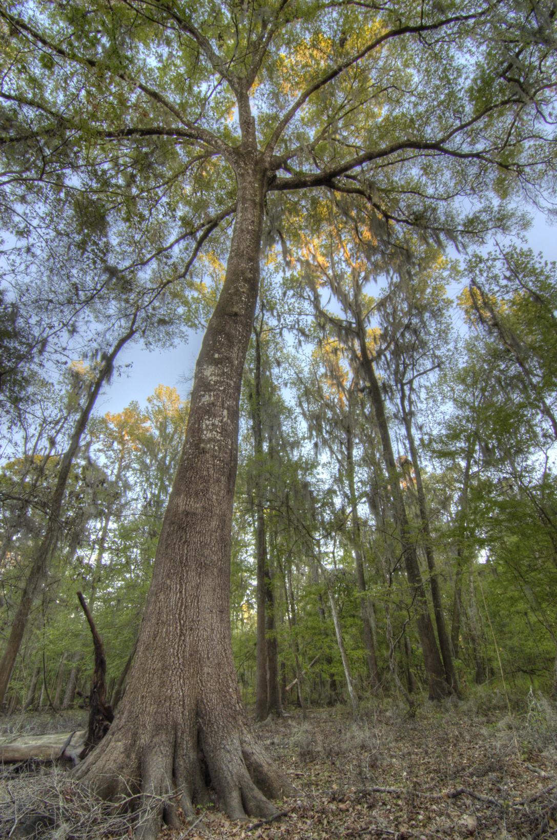 Off Market: Land in Millhopper Forest