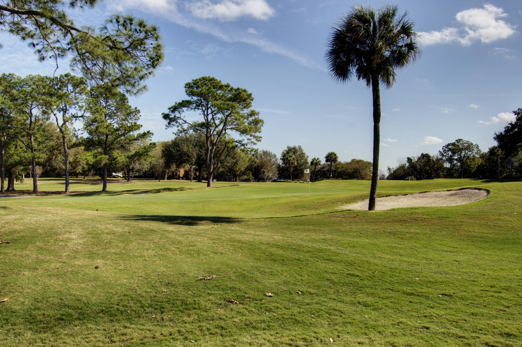 FORE! A Review of Gainesville Golf Courses