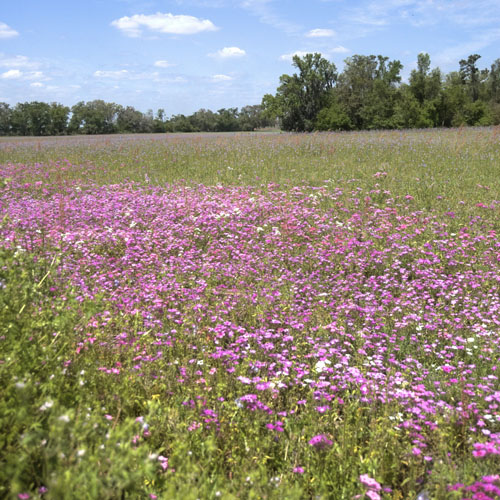 Wildflowers in alachua county